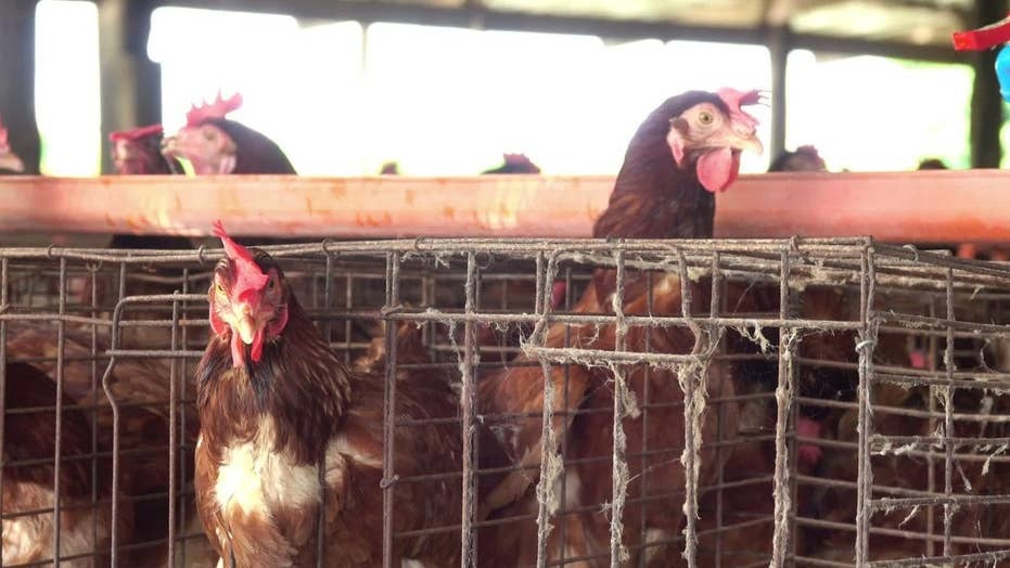 California to vote on farm regulations