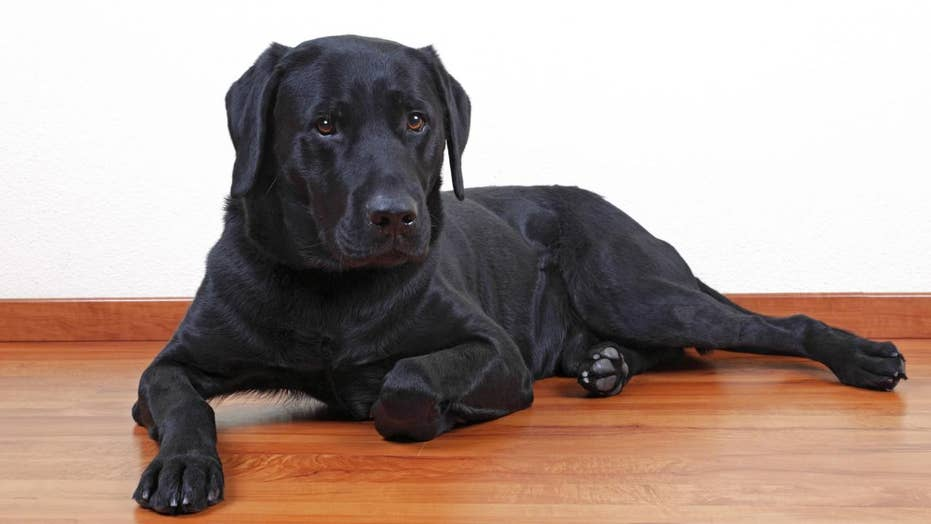 Could a dog's color be linked to how long they live?