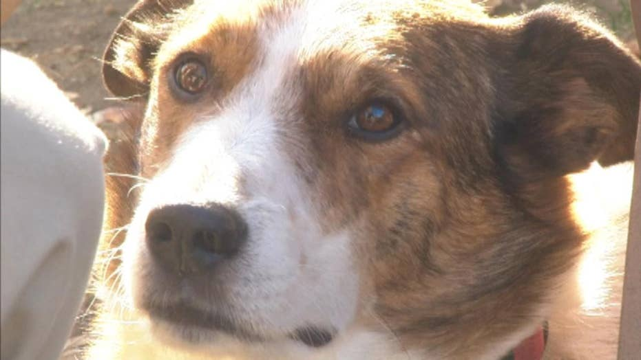 Dog helps owners get sober from meth addiction