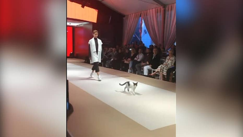 Cat crashes runway at Turkey fashion show, goes viral on
