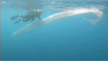 Mysterious 26-foot worm-like sea creature stuns divers