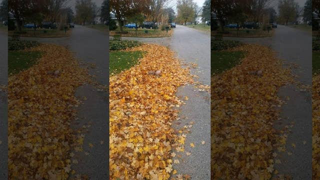 UPS driver snaps photo of boy in leaf pile as a warning