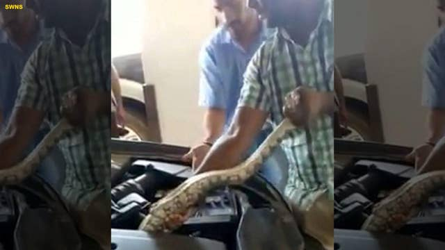 Man finds 8-foot python in his car's engine