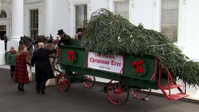 White House Christmas tree arrives in horse-drawn carriage