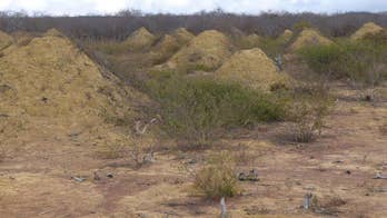 Massive termite mounds seen from space
