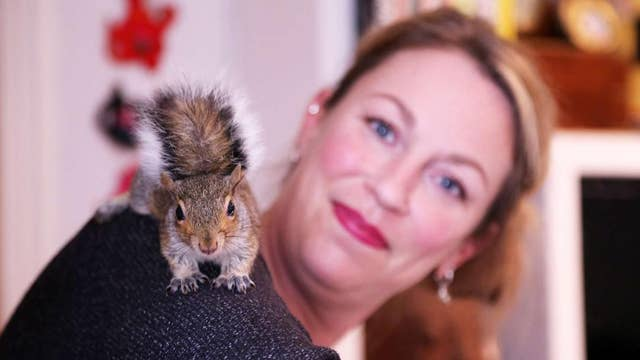 Rescued squirrel becomes part of woman's family