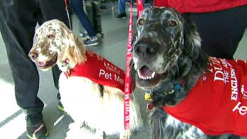 LAX using therapy dogs to bring relief to holiday travelers