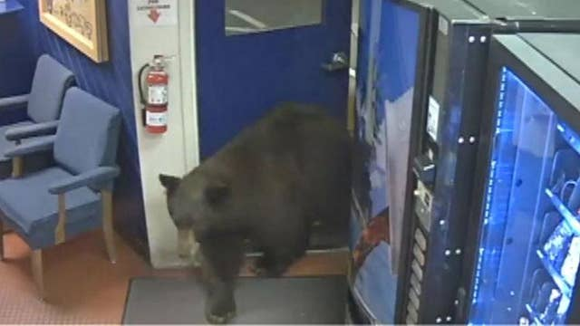 Bear finds its way into California Highway Patrol facility