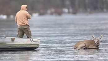 Dramatic video shows hunters rescuing buck deer from frozen lake