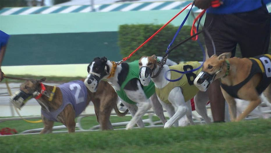 Greyhound racing ban in Florida leaves uncertainty for dogs