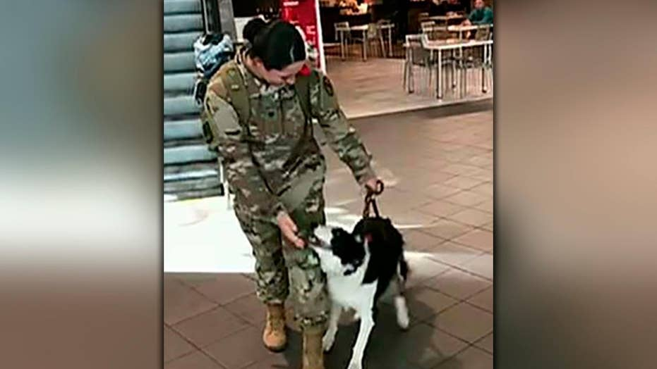 Dog gives soldier the ultimate welcome home