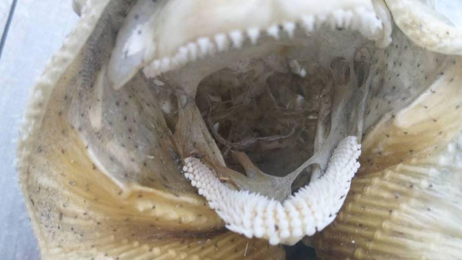 Mysterious sea creature draws 'alien' comparisons