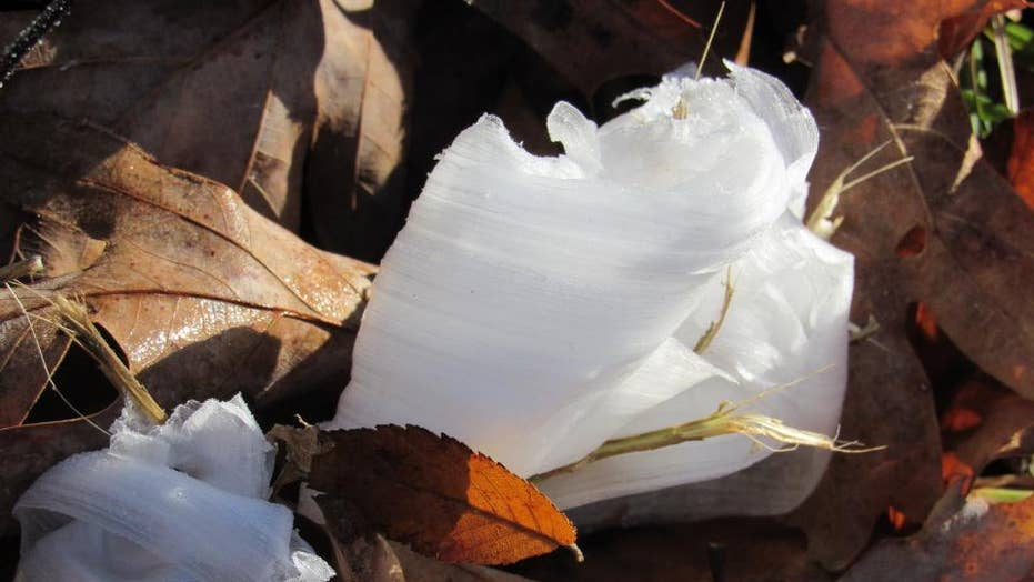 South Carolina battlefield covered in a phenomenon known as 'hair ice'
