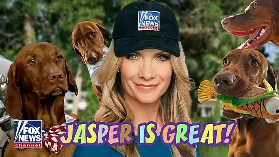 Jasper Is Great