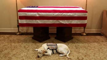 H.W. Bush's service dog Sully travels with casket