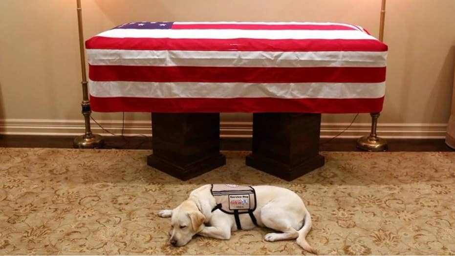 Slate writer roasted after attacking George H W  Bush's service dog