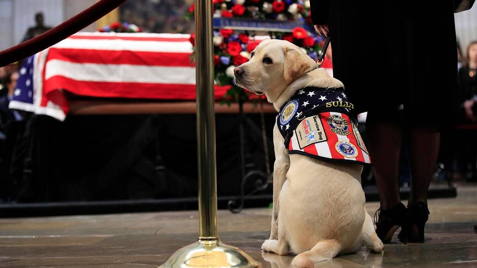 George H.W. Bush's casket visited by service dog Sully in Capitol ...