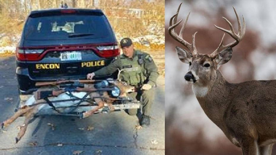 New York hunters fined after 'zombie' deer jumps from truck