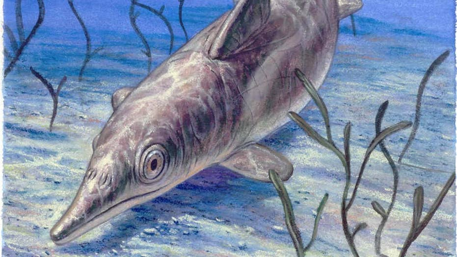 'Sea monster' fossil found with skin and blubber residue
