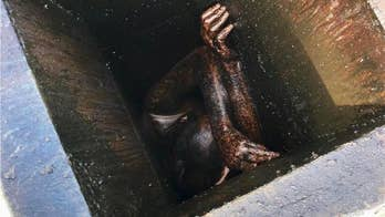 Burglar suspect trapped in grease vent at Chinese restaurant