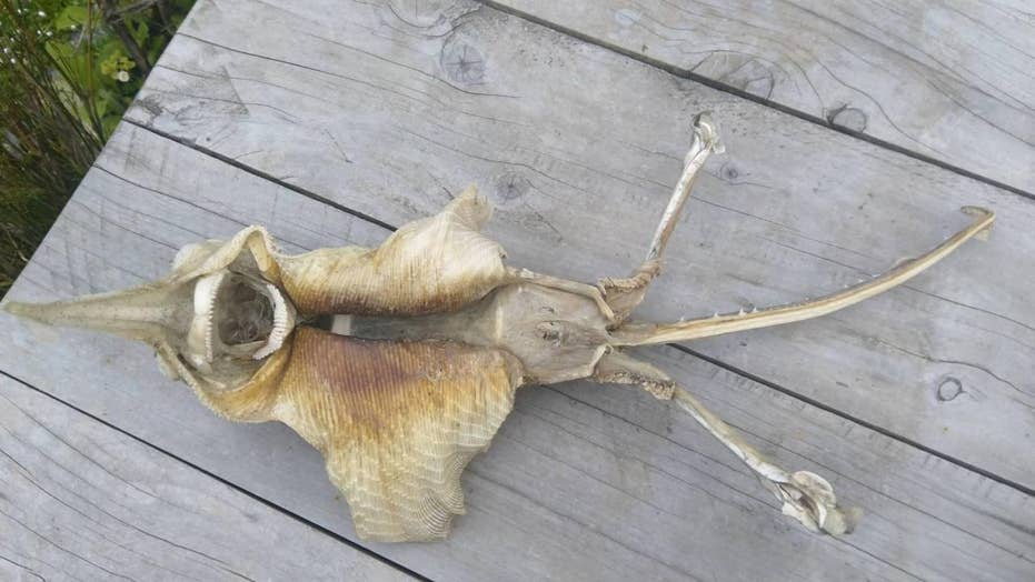 Mysterious sea creatures washed up in 2018, from shaggy