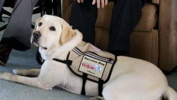 Sully, President George H.W. Bush's former service dog, visits WWII Memorial