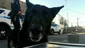 NYPD brings in K-9 units to help keep Times Square safe on New Year's Eve