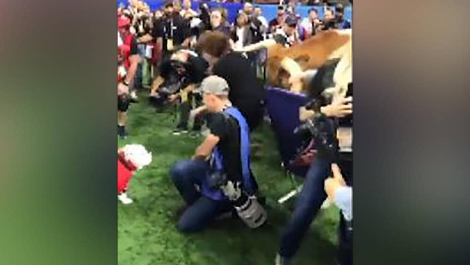 University Of Texas Mascot >> No Plans For Safety Measures After University Of Texas Mascot Lunges