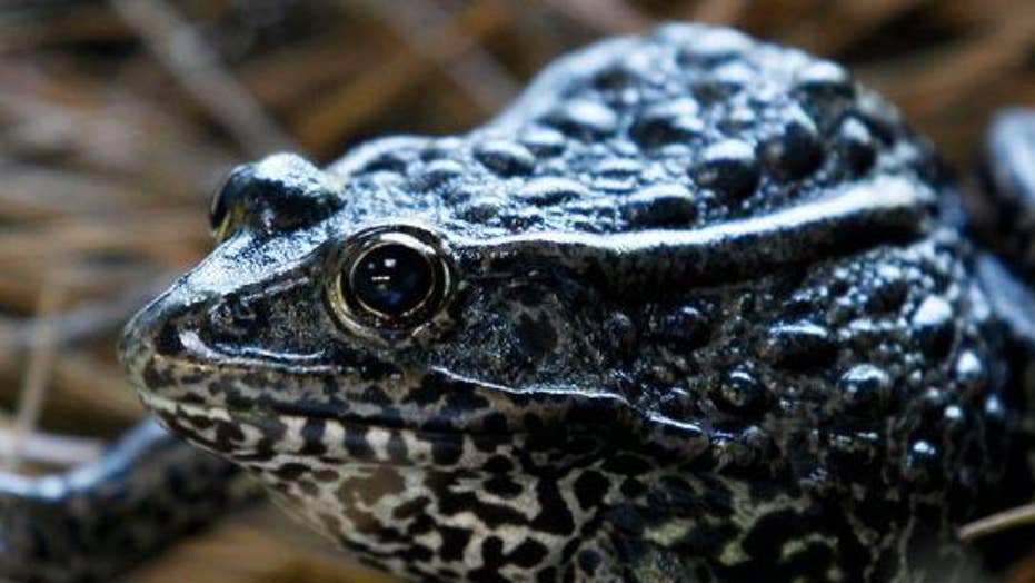 Why was the gopher frog in front of the US Supreme Court?