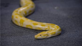 Deadly snake found in couple's bedroom air conditioner