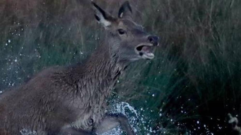 Hunter caught after illegally killing deer blames fear of wife getting mad at him