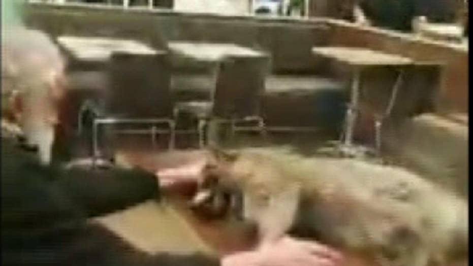 Disturbing Video: Man brings dead raccoon into San Francisco McDonald's, forces the restaurant to close
