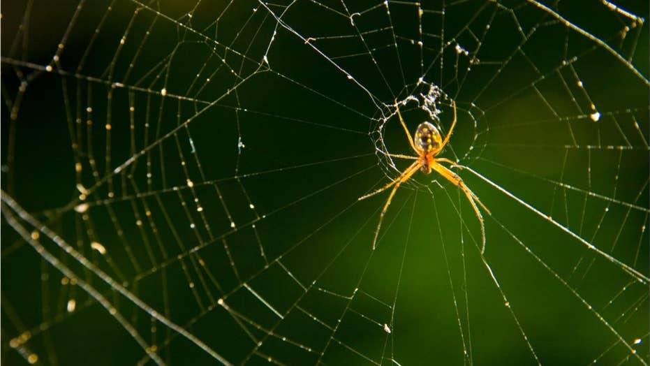 'Raining spiders' in Brazil