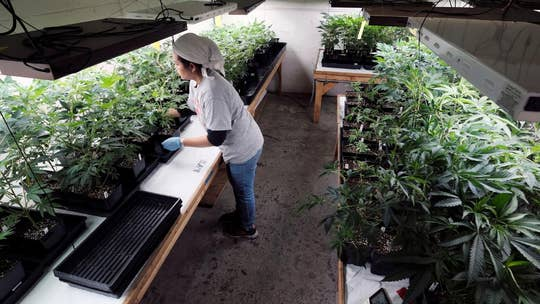 Alex Berenson: Pot is not a cure-all medicine – I told the truth and the backlash has been incredible
