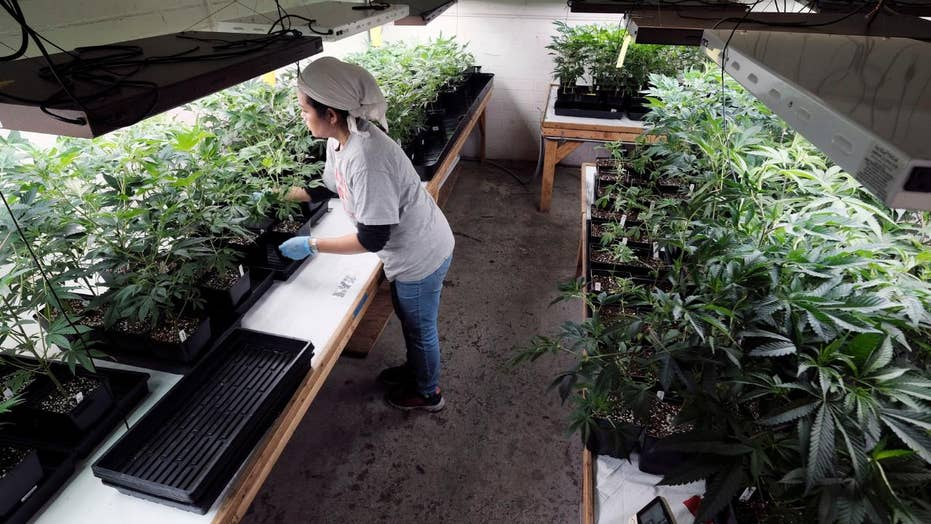 Author receives nation-wide blowback for book on harmful effects of marijuana