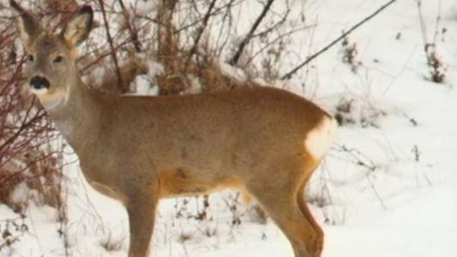101-year-old hunter kills two deer with one bullet