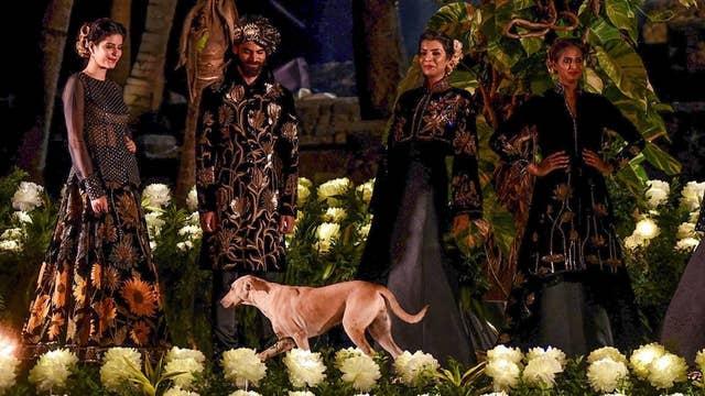 Stray dog crashes runway at Mumbai fashion show