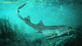 Prehistoric shark with 'spaceship-shaped teeth' discovered alongside the most famous Tyrannosaurus