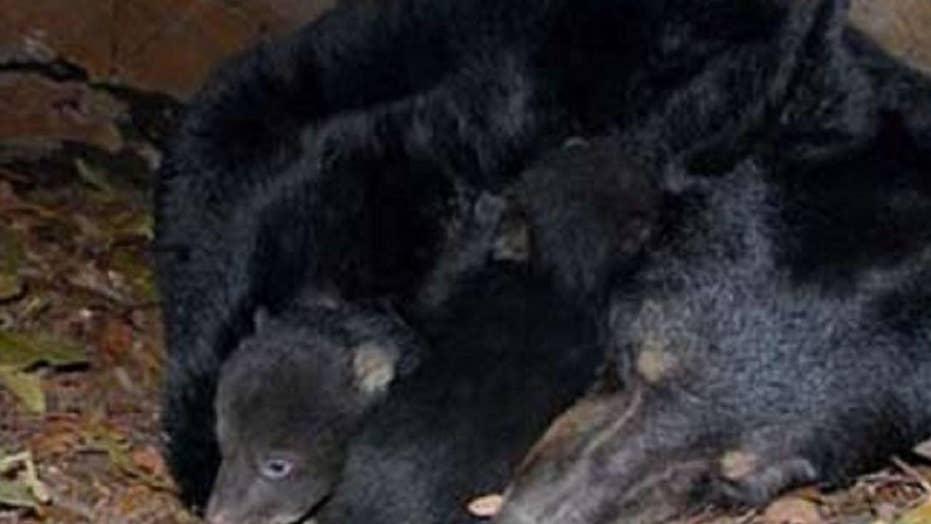 Alaska dad, son sentenced for killing mother bear, newborn cubs