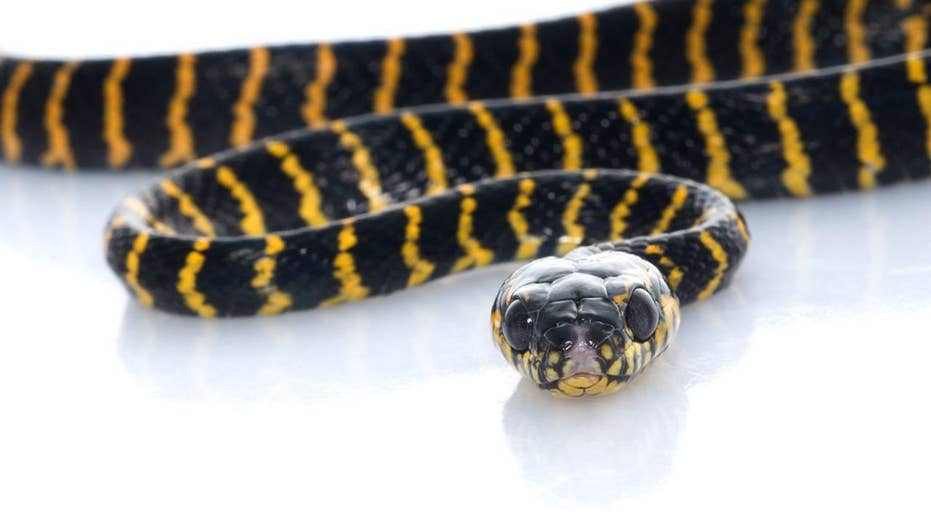 Woman bit by python while on the toilet