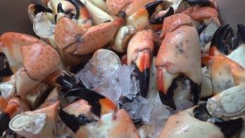 Red tide hurting Florida stone crab fisherman