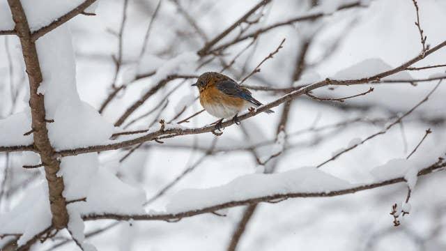 What happens to birds during the polar vortex?