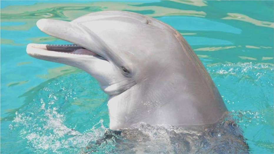 Fourth bottlenose dolphin dies at Dolphinaris Arizona in less than two years