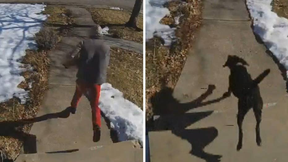 Family dog chases down porch pirate in Utah