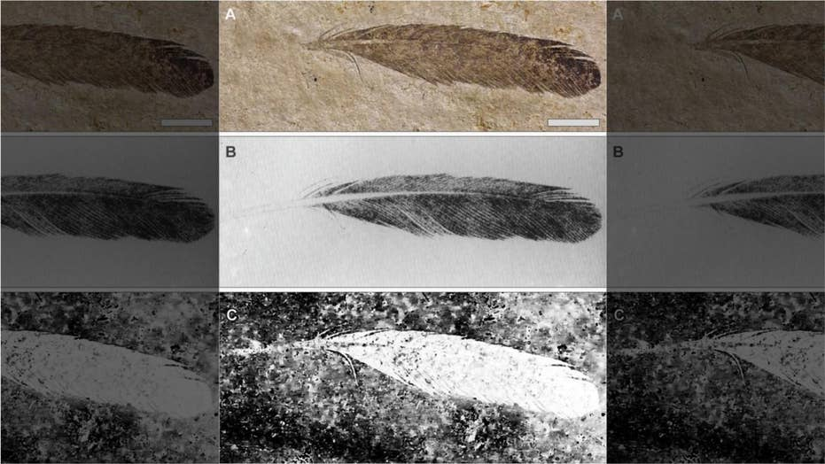 First dinosaur feather ever discovered reveals mysterious secrets