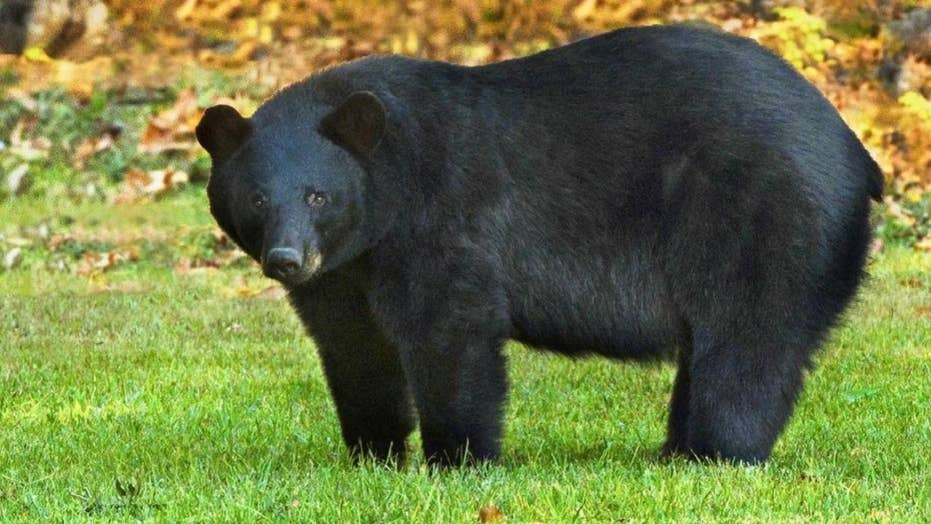 Autopsy reveals a Tennessee man died of a meth overdose before being eaten by a bear at a park