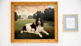 American Kennel Club reopens the Museum of the Dog
