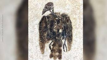 52-million-year-old bird fossil found with feathers still attached in Wyoming