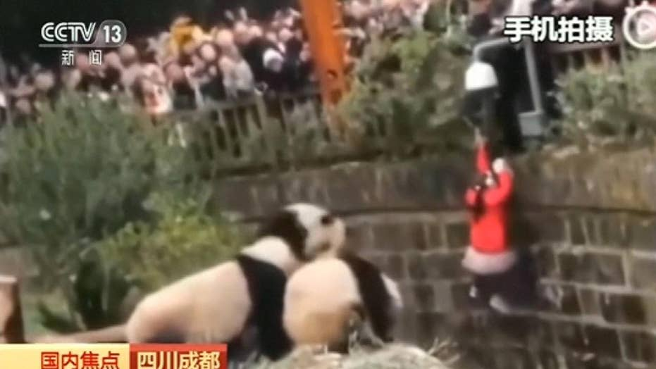 Little girl pulled to safety after falling into panda enclosure in China