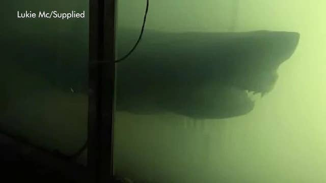 'Mysterious' giant shark discovered in abandoned wildlife park